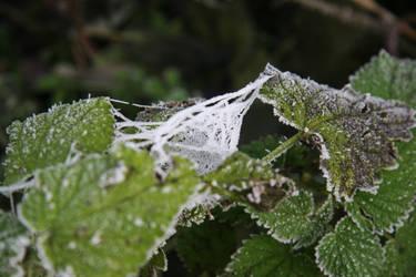 frozen leaves by DianaShadoweye