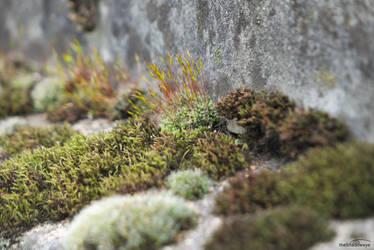 Little Garden by DianaShadoweye