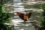 Walking Chick by DianaShadoweye
