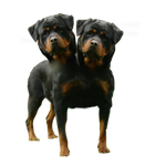 Orthus Two Headed Dog