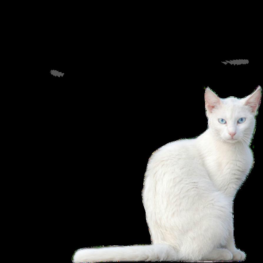 White Kitty PNG Stock by vamp1967 on DeviantArt