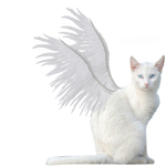 Winged Kitty PNG Stock