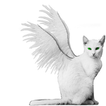 White Winged Kitty PNG Stock Green Eyes Burned