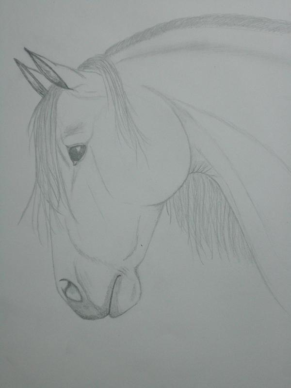 Lipizzaner Stallion by Nisira
