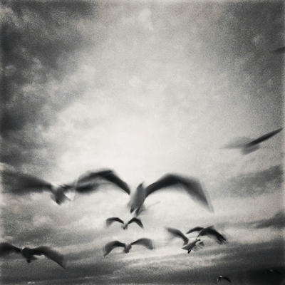 Snapshot 65 - Sea Birds by James-McKenzie