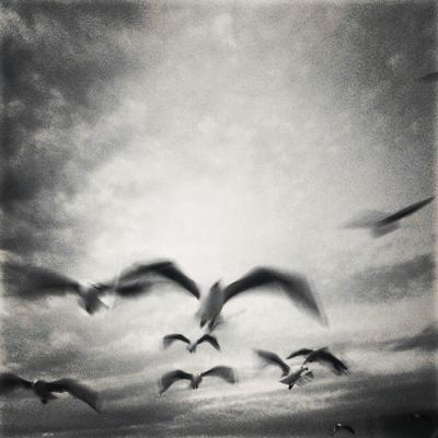 Snapshot 65 - Sea Birds by James-McKenzie