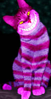 Cheshire Cat by Animalluver1985