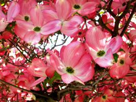 may flowers, II