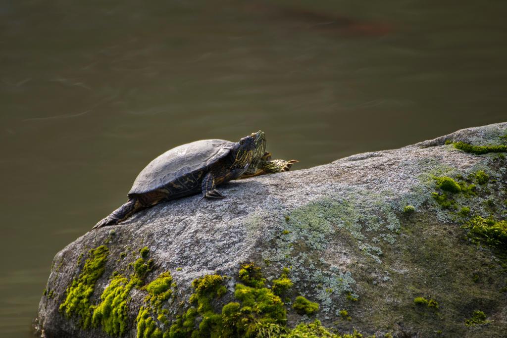 Turtles by SiNg0d