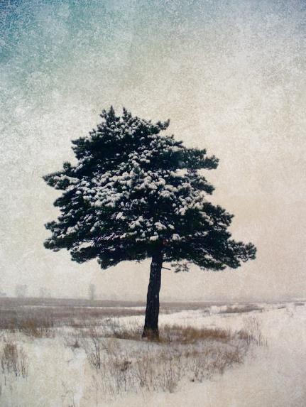 Snowbound by Anguis-IX