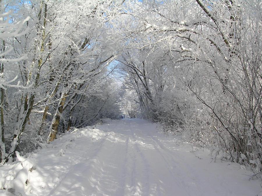 Snow by LillyClaw