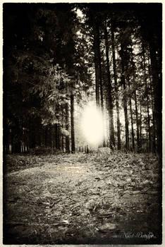 Strange light in the woods