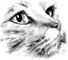 Cat by LuisSanchez