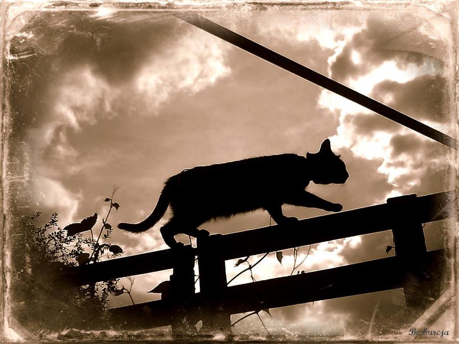 Cat 2 by Beskurcja