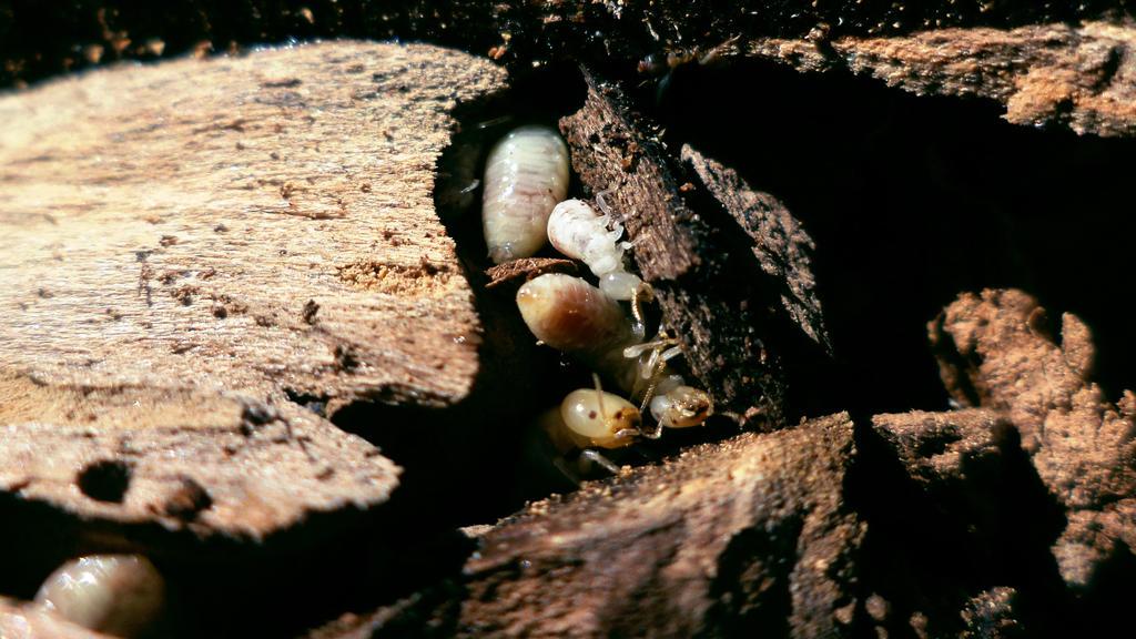 Termitas by TheWallProducciones