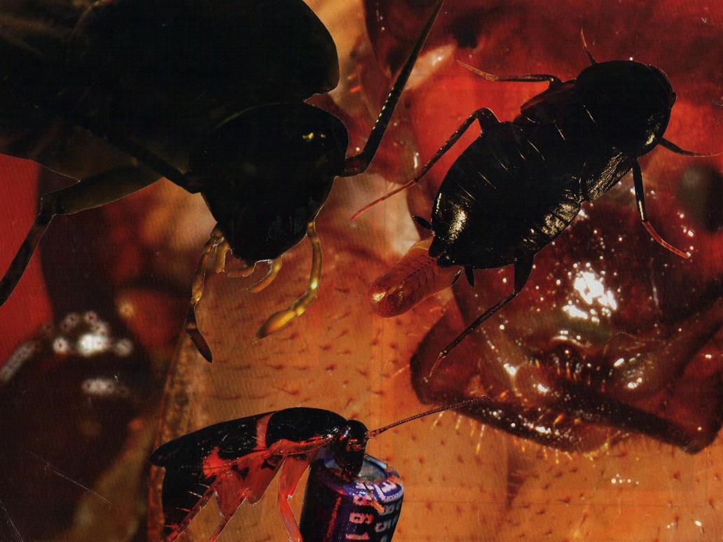 Cucaracheitor by TheWallProducciones