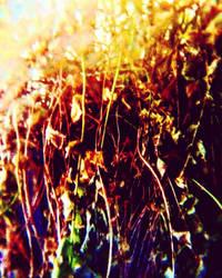 Dried Up Ferns