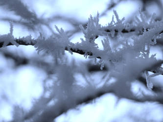 Icy Blue by Chocolatecookiecrumb