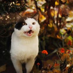 Autumn kitty by mniami