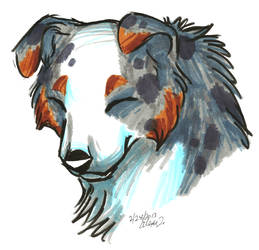 Brush Breeds-Australian Shepherd