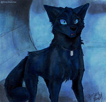 Wolf's Rain-Found by Stray-Sketches