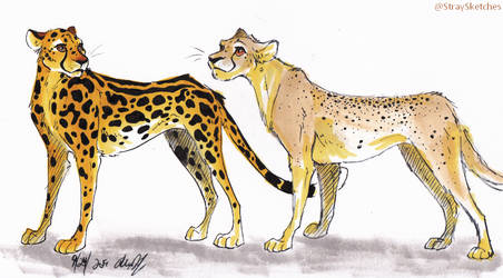 cheetah variations