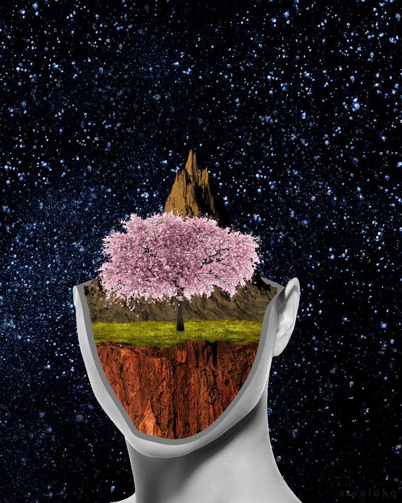 Cherry Blossom  by xavierlokollo