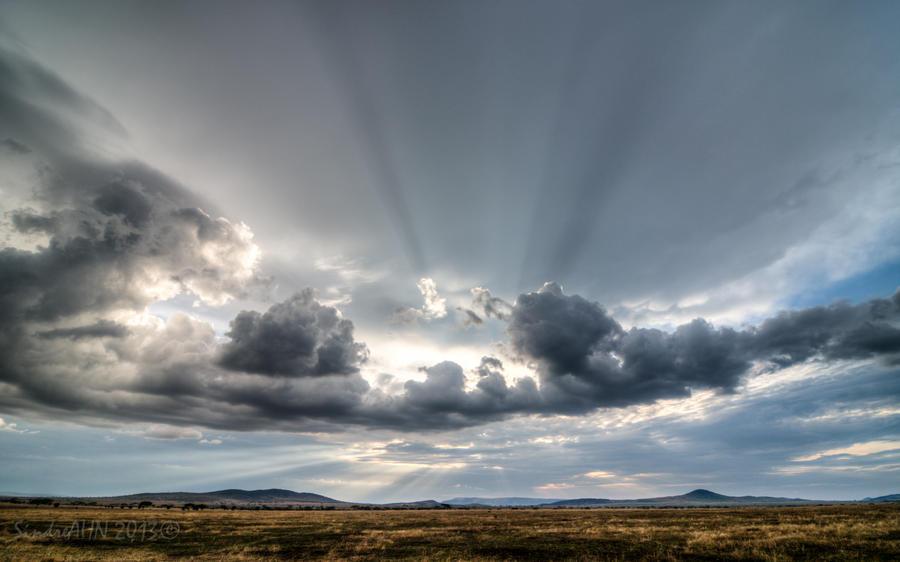 Evening Light in Serengeti