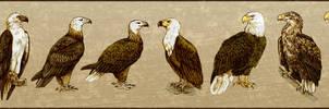 The Eight Sea Eagles