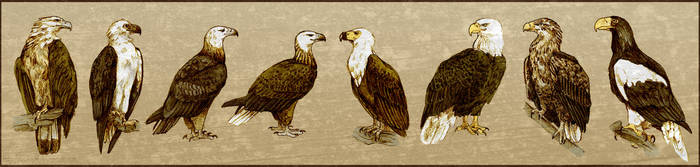 The Eight Sea Eagles by Quisum