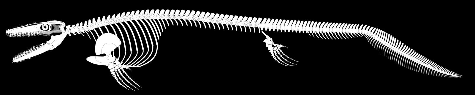 Mosasaurus hoffmannii Reconstruction (UPDATED) by PWNZ3R-Dragon