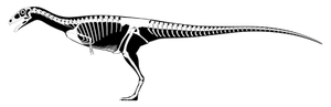 Deltadromeus agilis SGM-Din2 Reconstruction