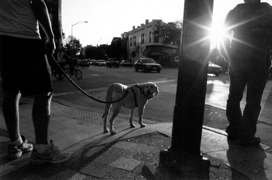 dog and sun by amderma