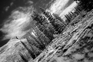 Tilted Wilderness by Nestor2k