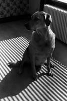 Window Dog by Nestor2k
