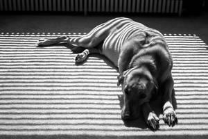 Window Dog 2 by Nestor2k