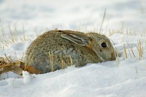 Eden Rabbit by Nestor2k