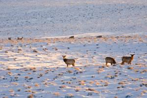 Jonah Elk and Deer by Nestor2k