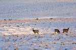 Jonah Elk and Deer