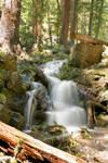 Summer Mountain Stream