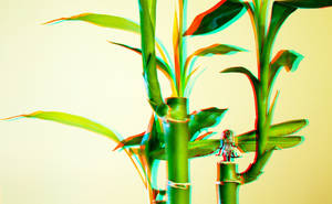 3D Anaglyph Bamboo by Nestor2k