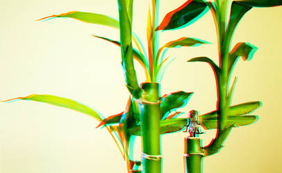 3D Anaglyph Bamboo