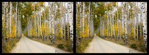 Aspen Alley 2011 3D
