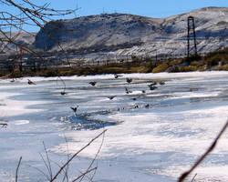Green River Birds no. 1 by Nestor2k