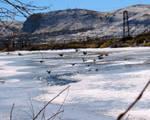 Green River Birds no. 1