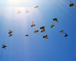 Green River Birds no. 2 by Nestor2k