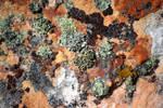 The Lichen Invades