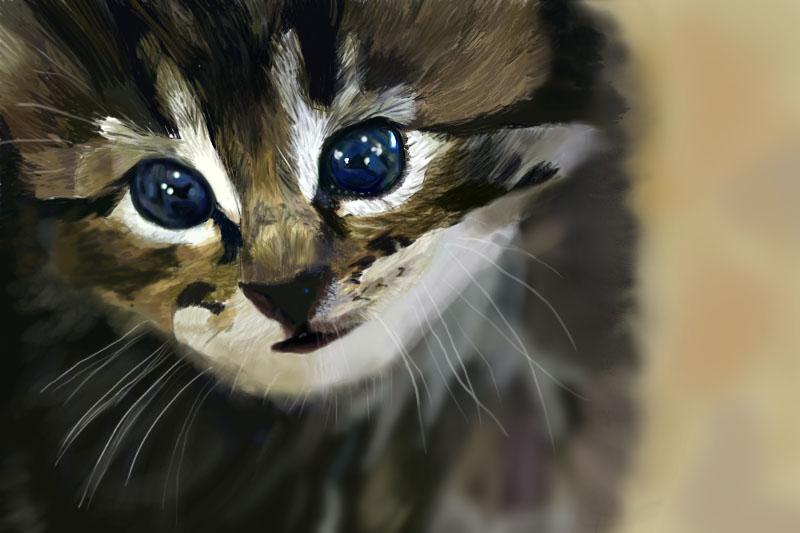 Big Eyed Kitty by Shadowsprint