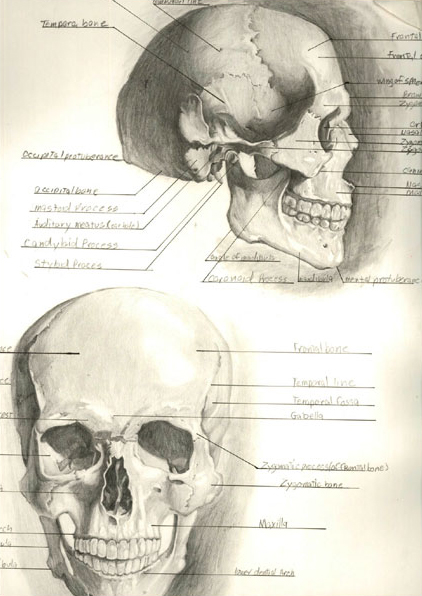Skull by kubagami