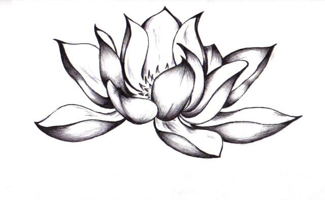 lotus by surf 4 life